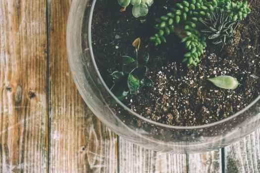 botanical glass growth herbal